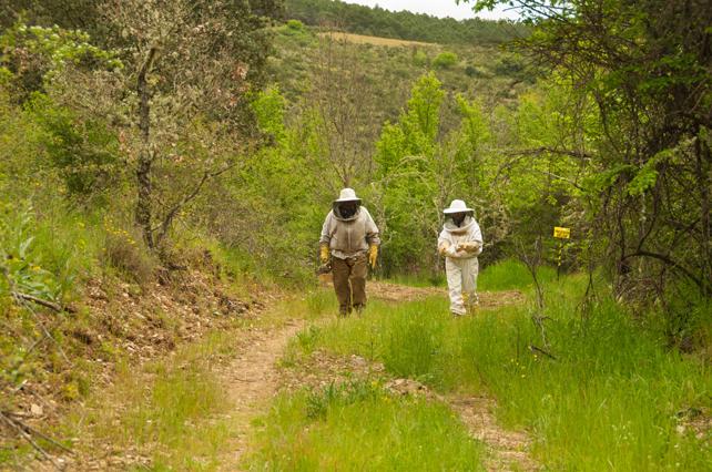 Caminando por uno de los parajes cercano a nuestros apiarios.