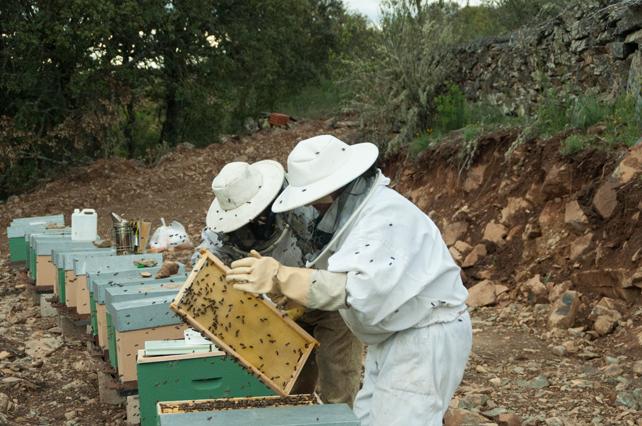 Ilusionados en el trabajo diario en el apiario.