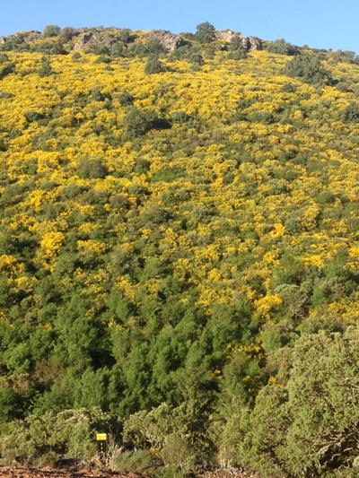 El monte de Mazada florido en primavera. Se puede apreciar como al pie del mismo se encuentra la señalización de los apiarios.