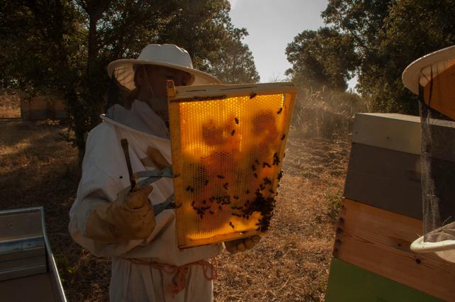 Analizando en campo la situación del apiario.
