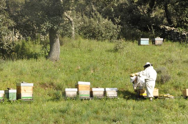Realizando labores de inspección en el apiario de LLamorgao.