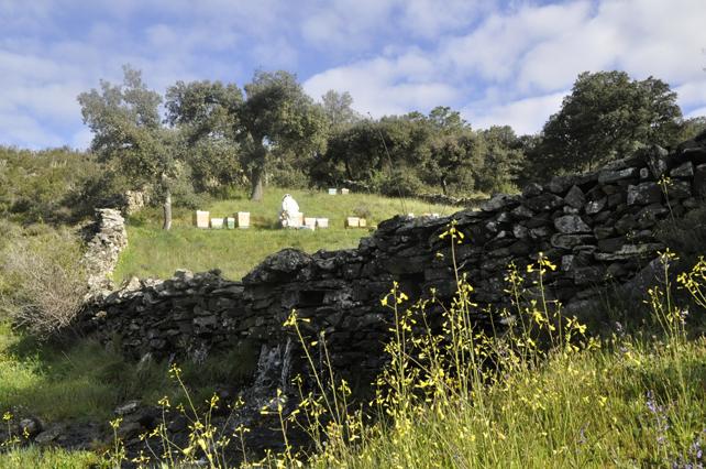 En el apiario de Llamorgao se puede sentir la presencia del agua destilando entre las piedras que conforman su contorno.