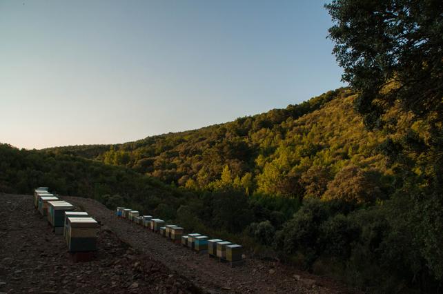 Distribución de los bancales del apiario de Mazada.