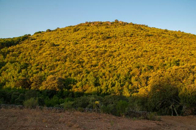 Vista del apiario de Mazada desde su acceso.