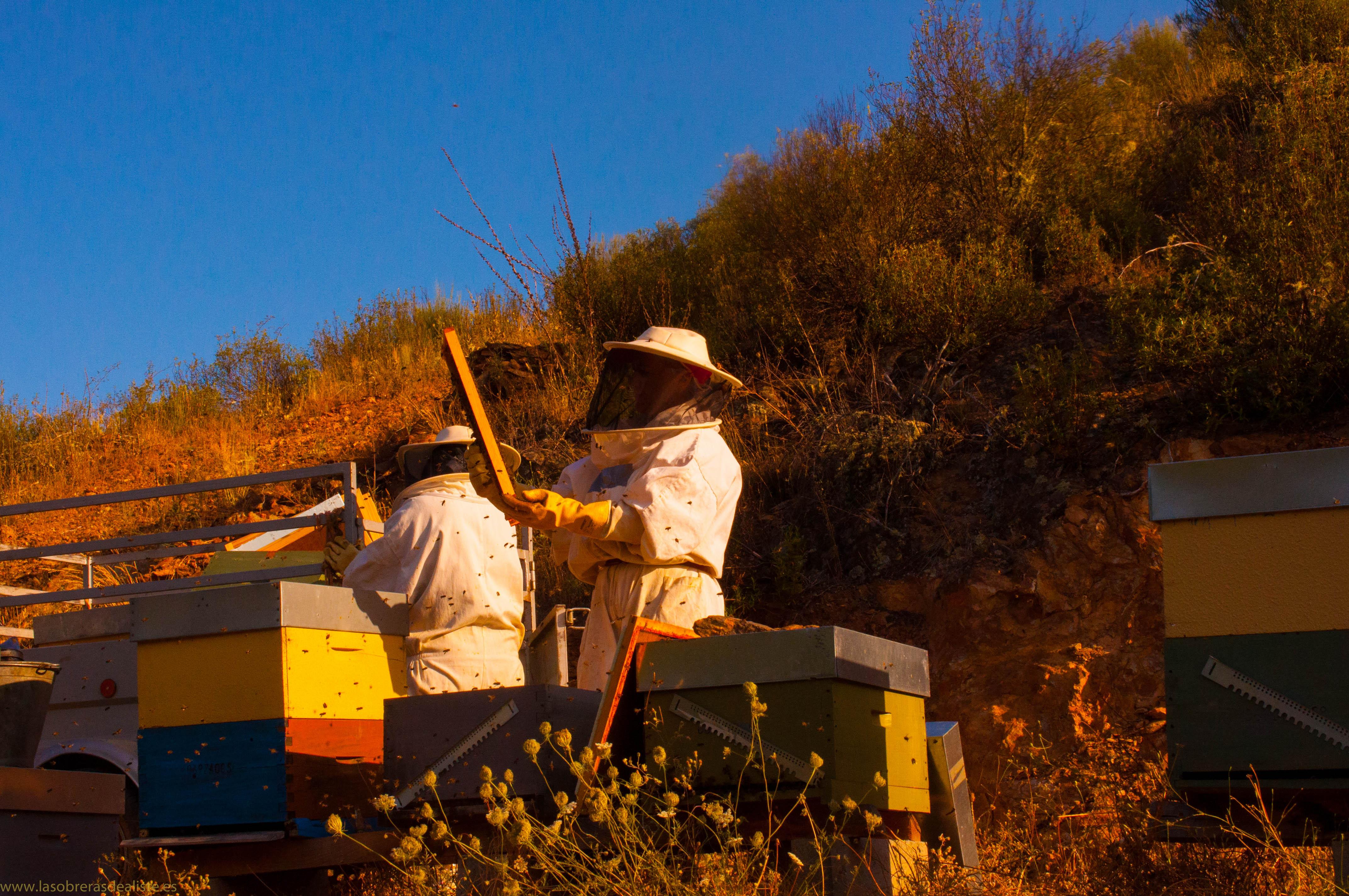 política medioambiental las obreras de aliste miel