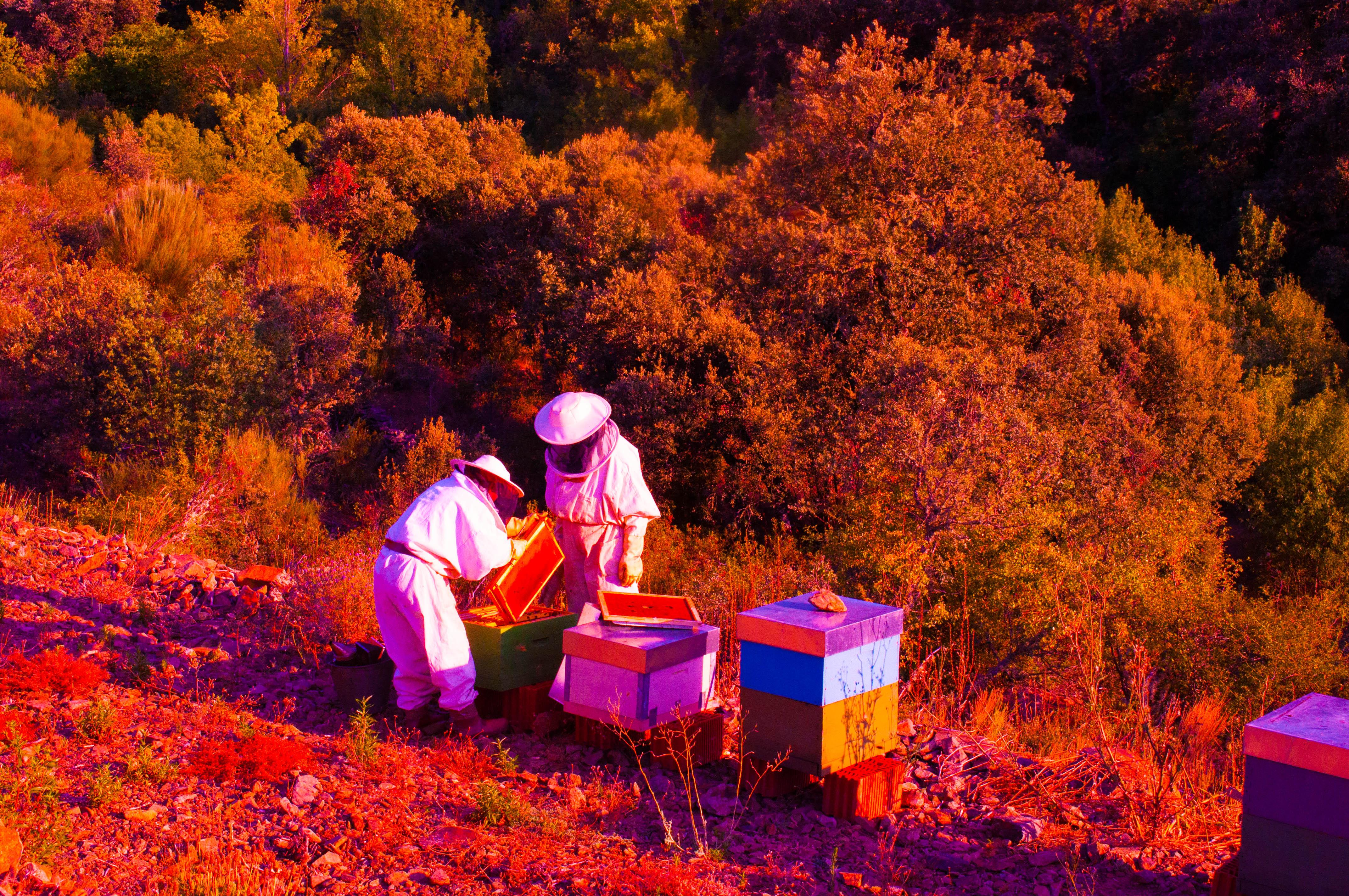 politica medioambiental las obreras de aliste miel
