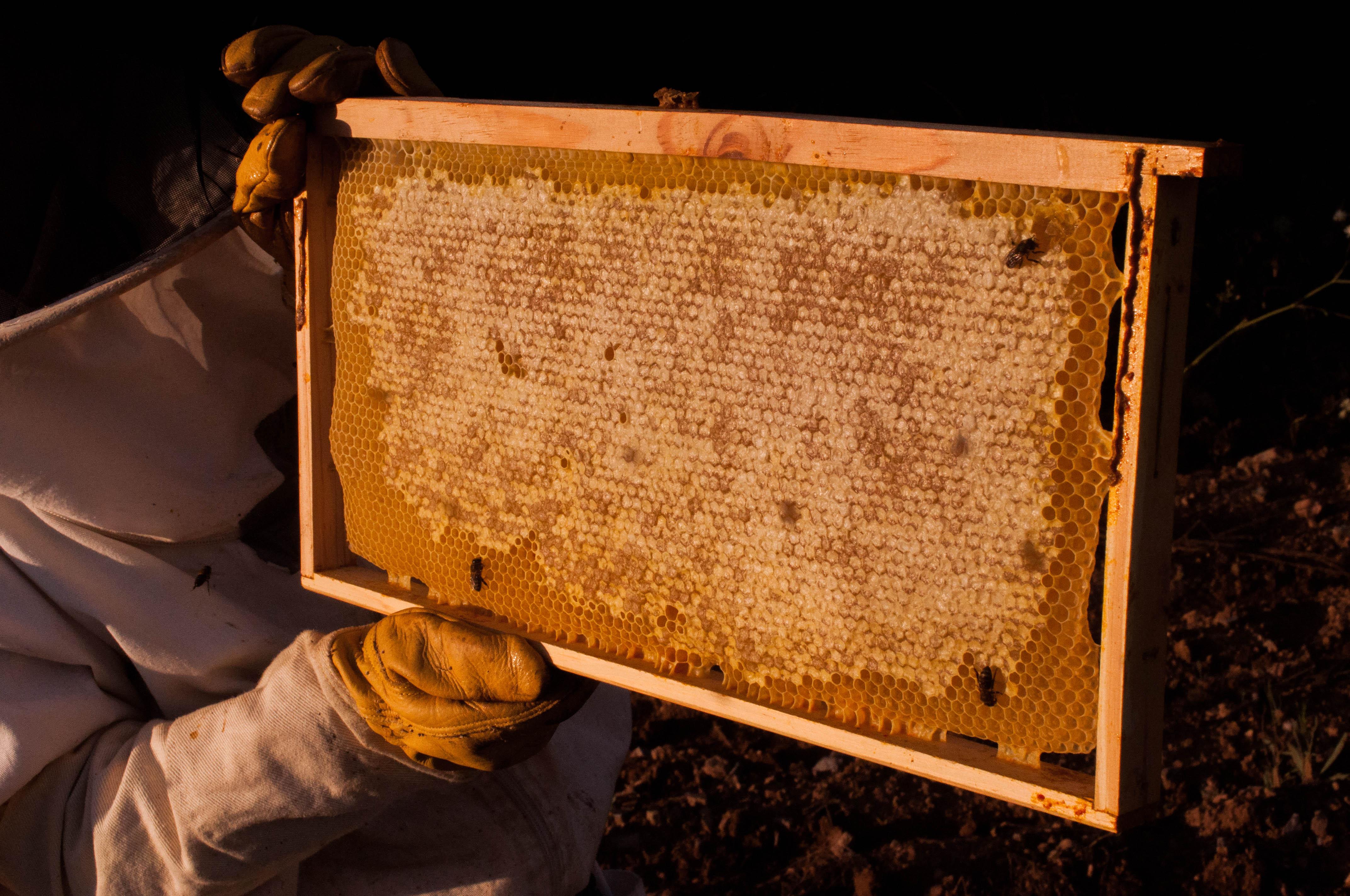 miel operculada multifloral Las Obreras de Aliste Artesanos de la miel Zamora Spain