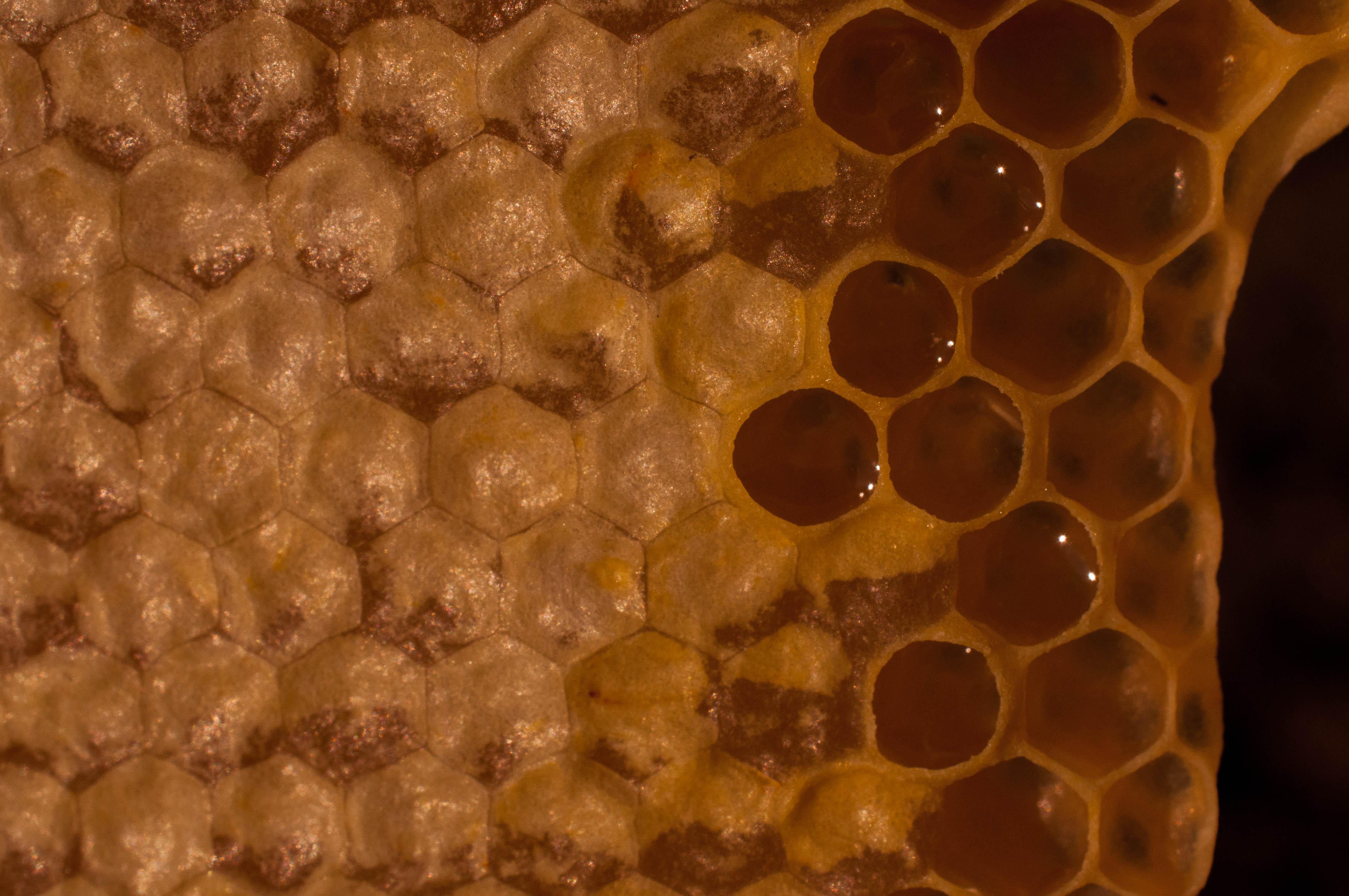 miel operculada multifloral Las Obreras de Aliste Artesanos
