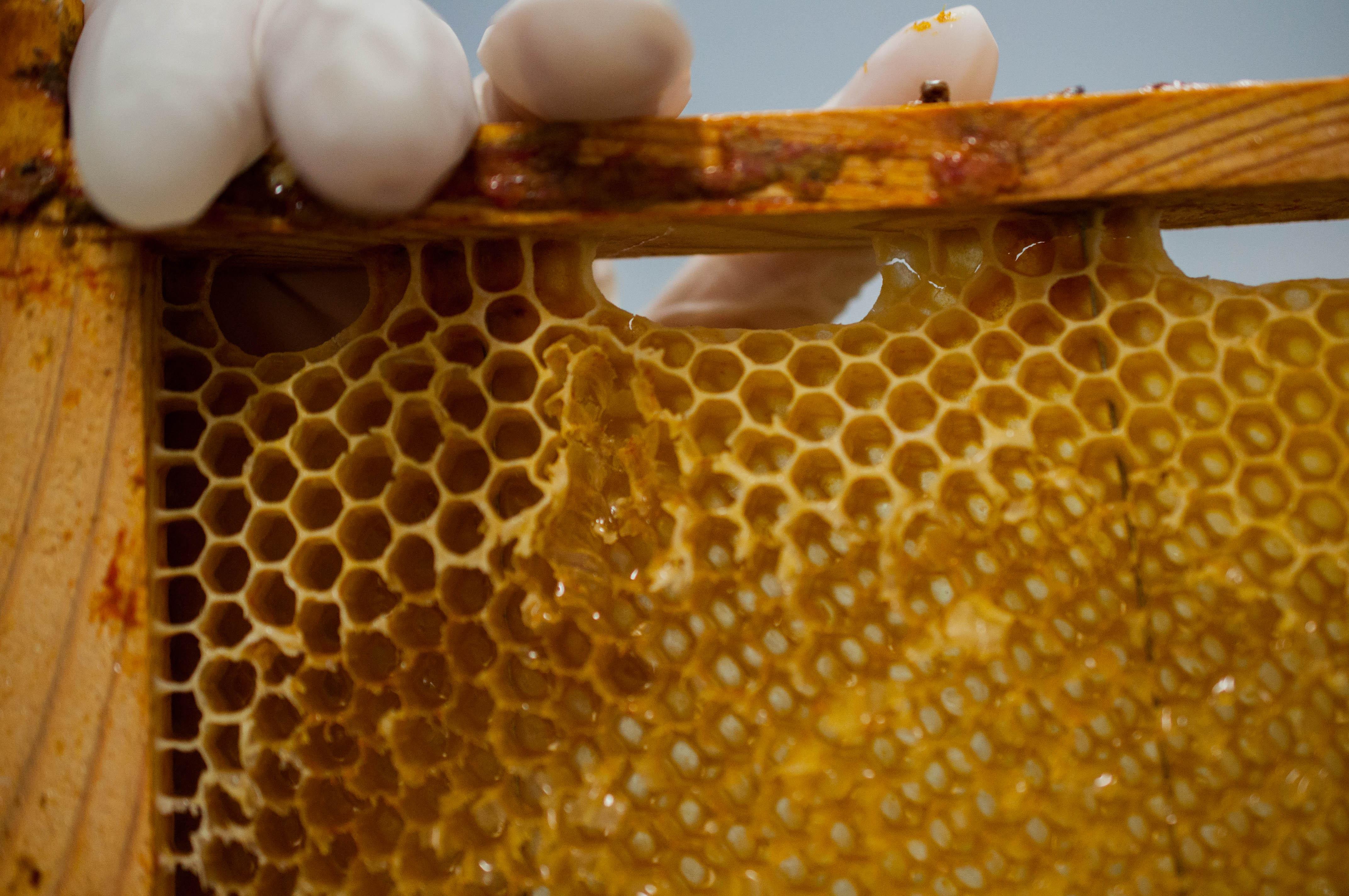 cuadro desoperculado Las Obreras de Aliste Artesanos de la miel Zamora Spain