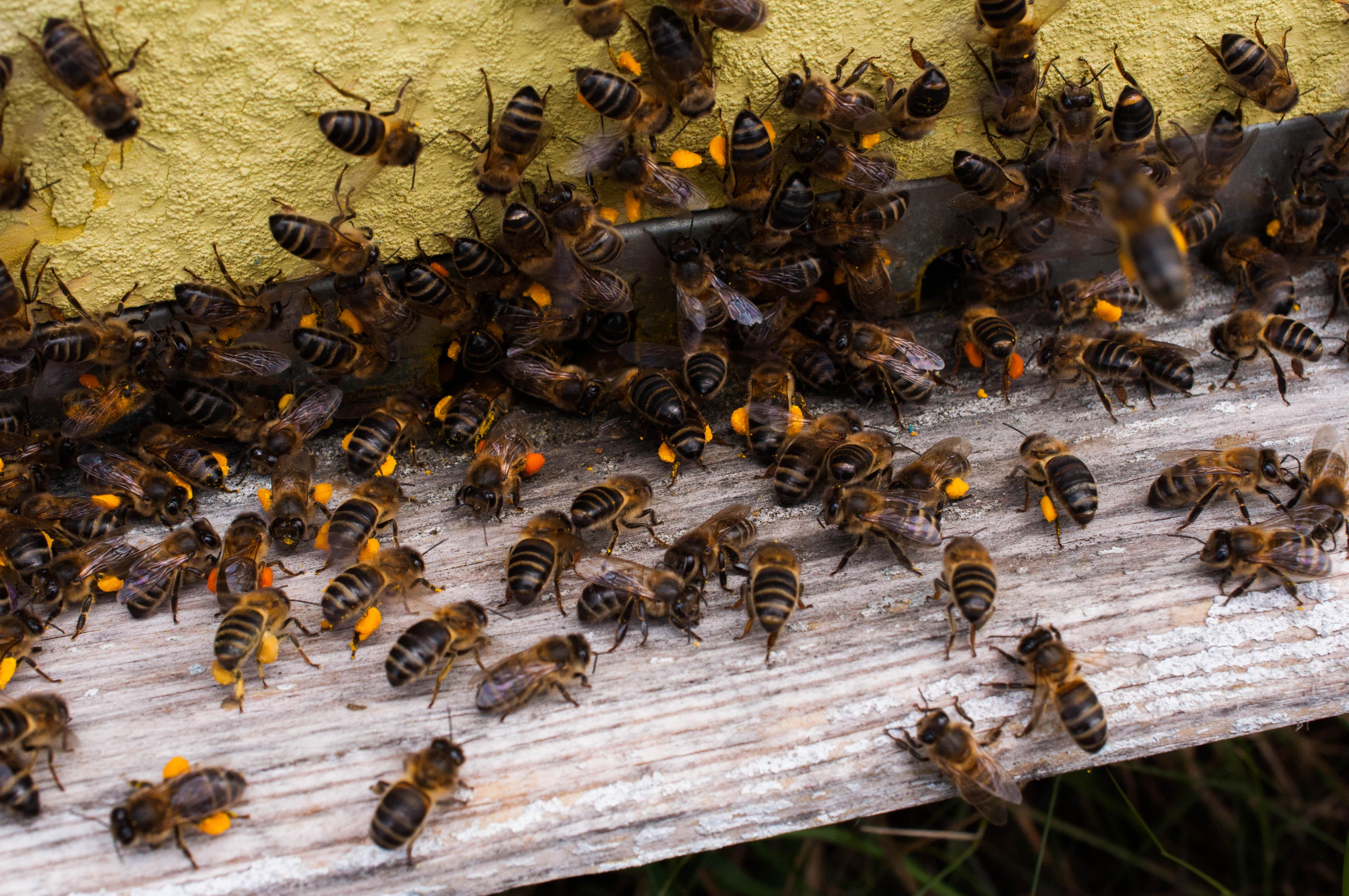 polen pollen Las Obreras de Aliste Artesanos de la miel Zamora Spain