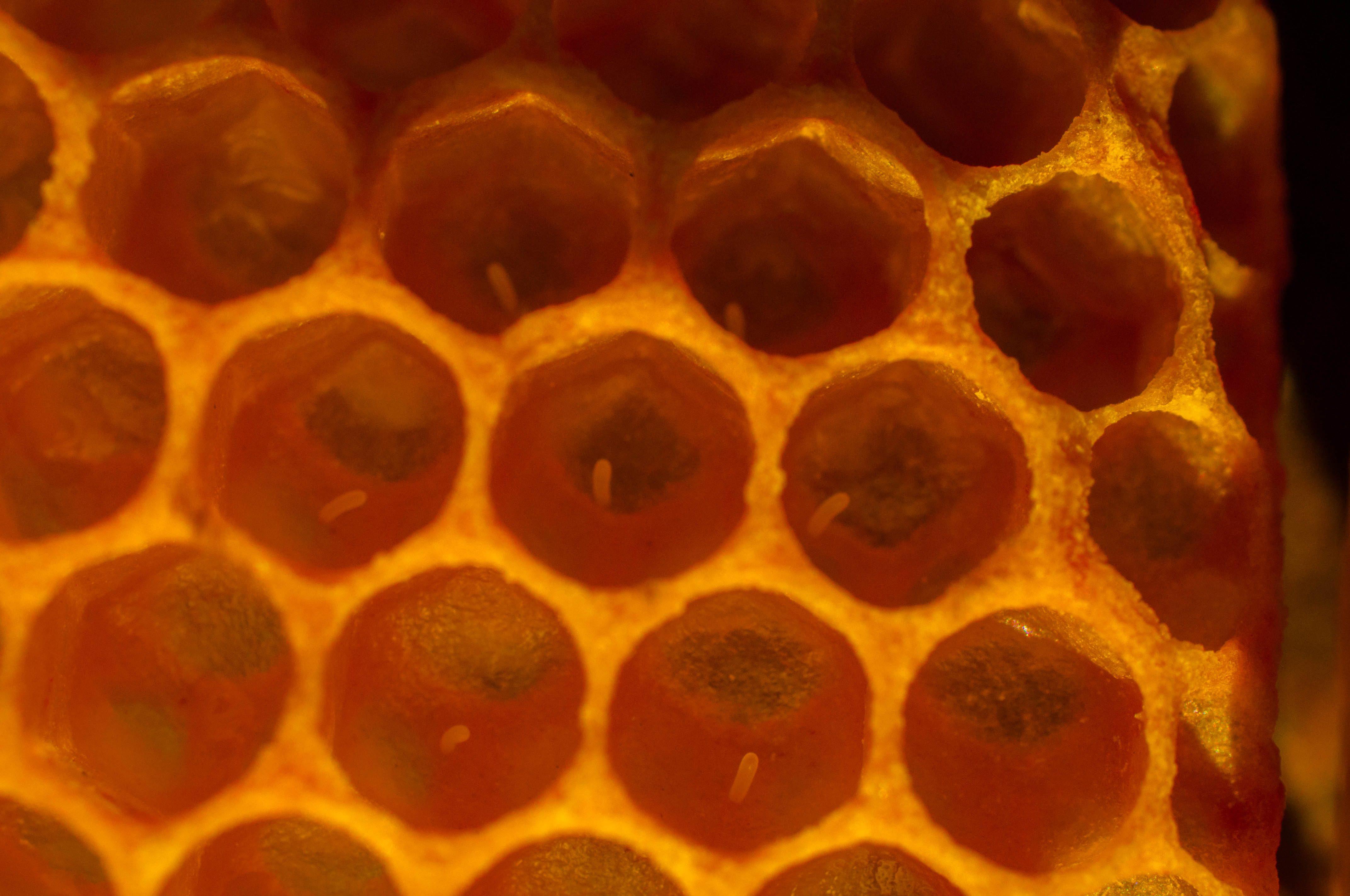 Huevos abeja Las Obreras de Aliste CB Artesanos de la Miel Aliste Gallegos del Campo Artesanos de la Miel