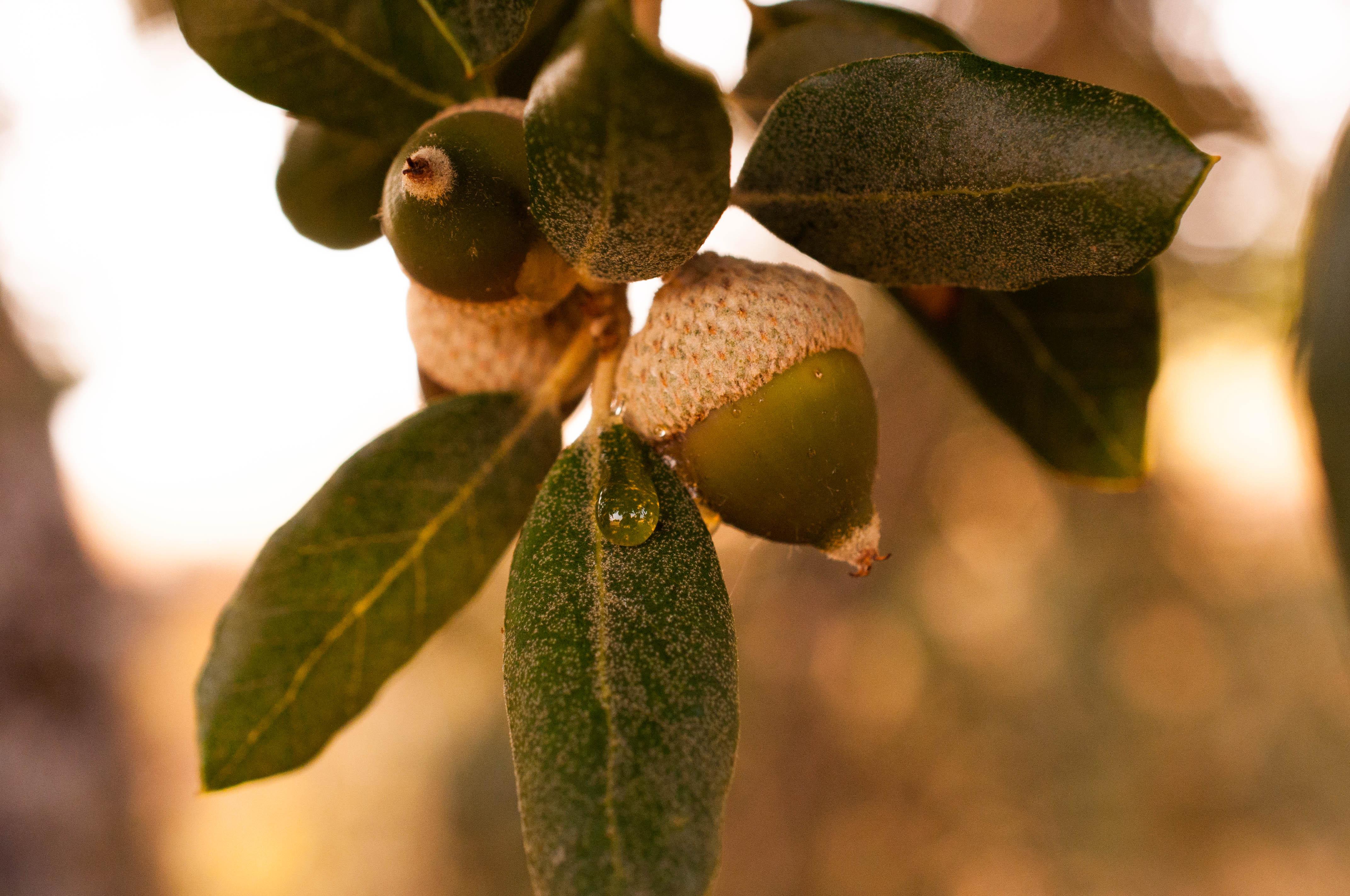 Mielada encina Las Obreras de Aliste Artesanos de la miel honey Spain