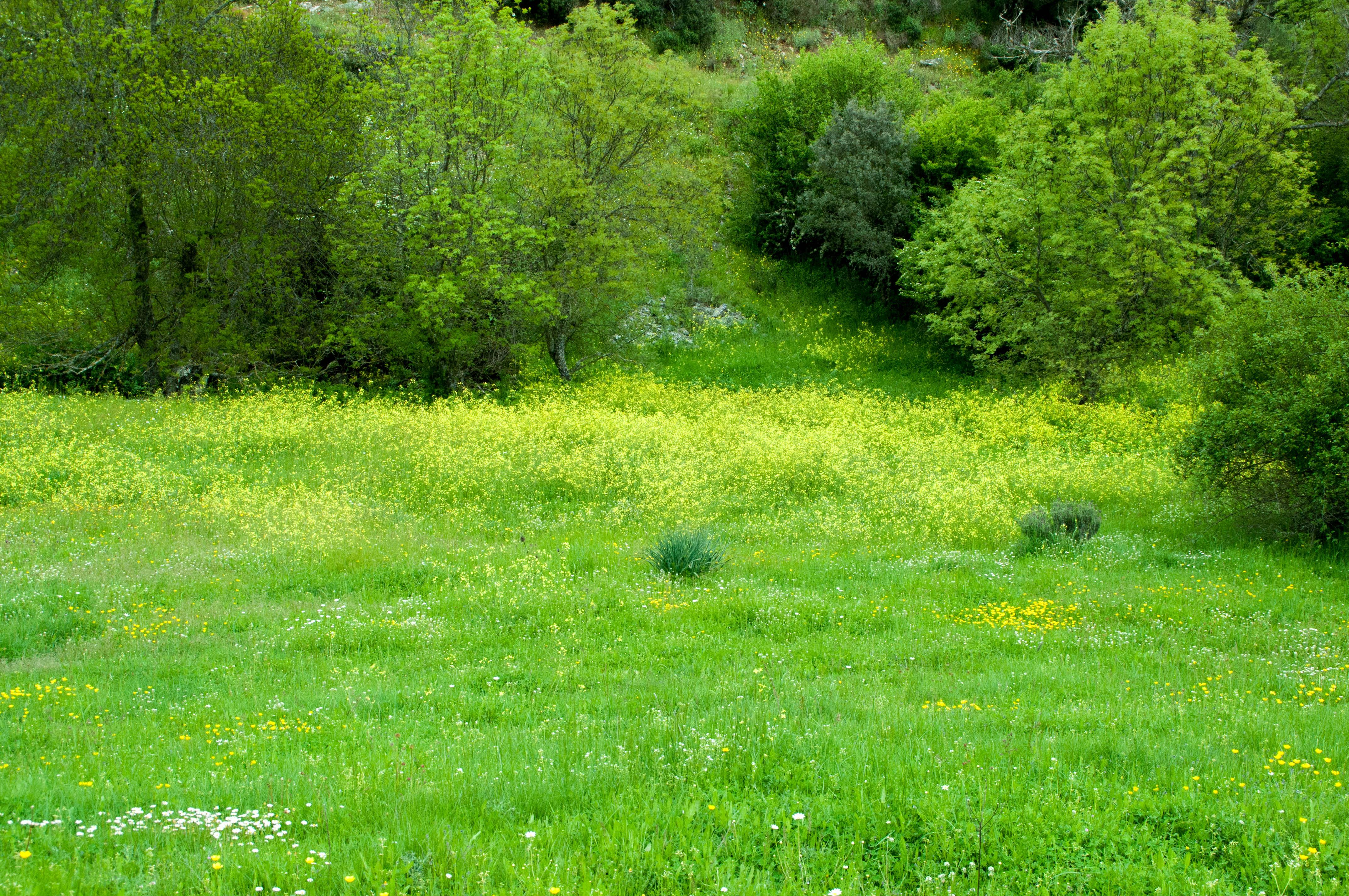 Floración en Aliste