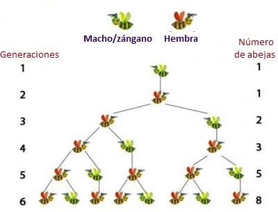 Fibonacci Las Obreras de Aliste miel