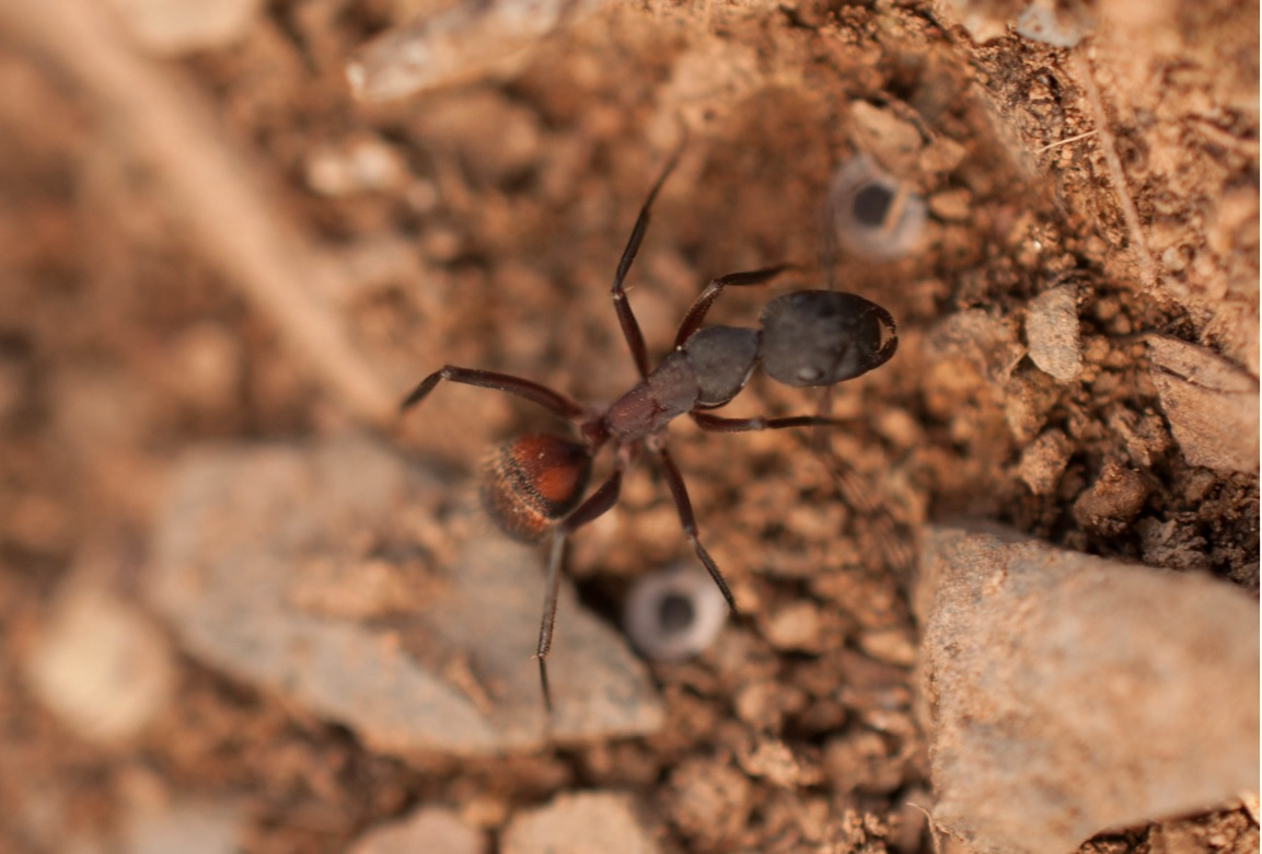 hormigas Las Obreras de Aliste CB Artesanos de la Miel Aliste Gallegos del Campo Artesanos de la Miel