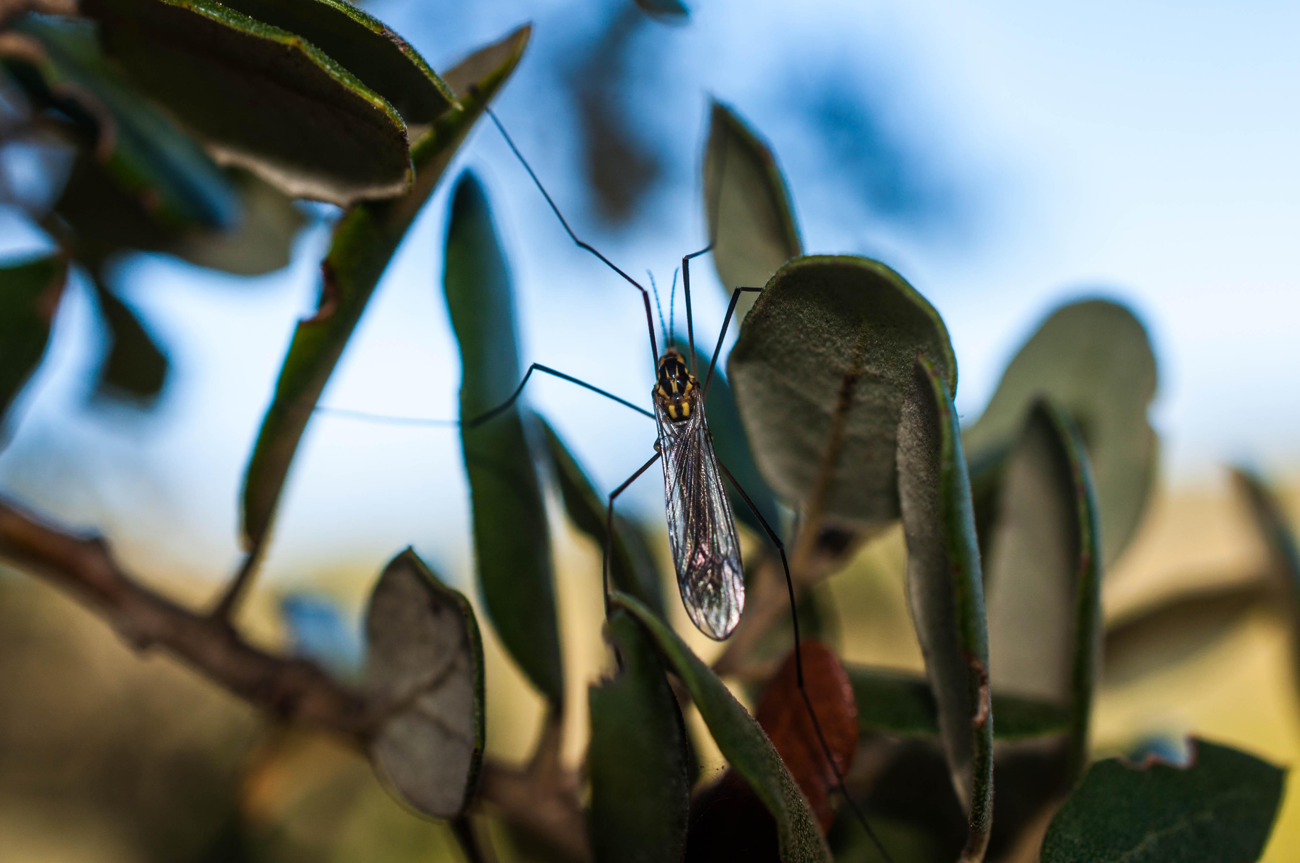 Biodiversidad Las Obreras de Aliste CB Artesanos de la Miel Aliste Gallegos del Campo Artesanos de la Miel