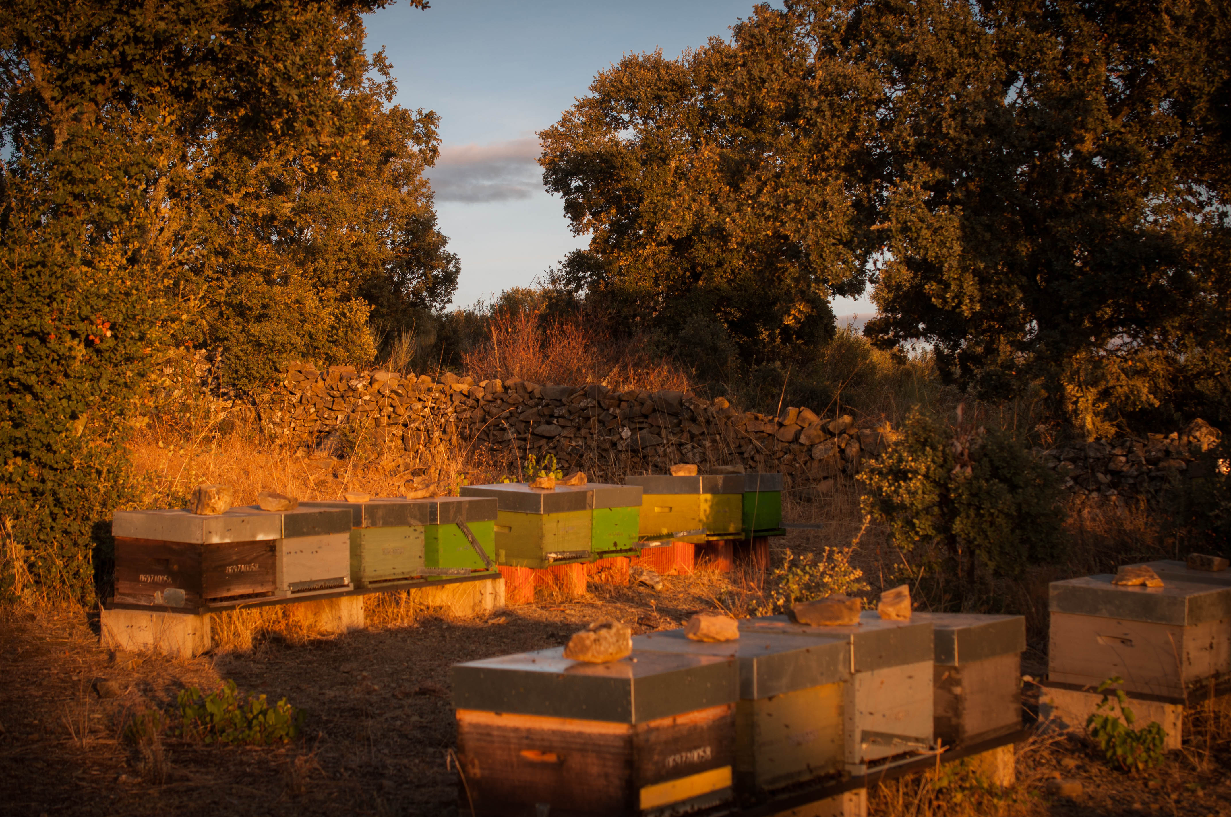animal welfare bienestar animal Las obreras de aliste cb abejas miel apicultura estante