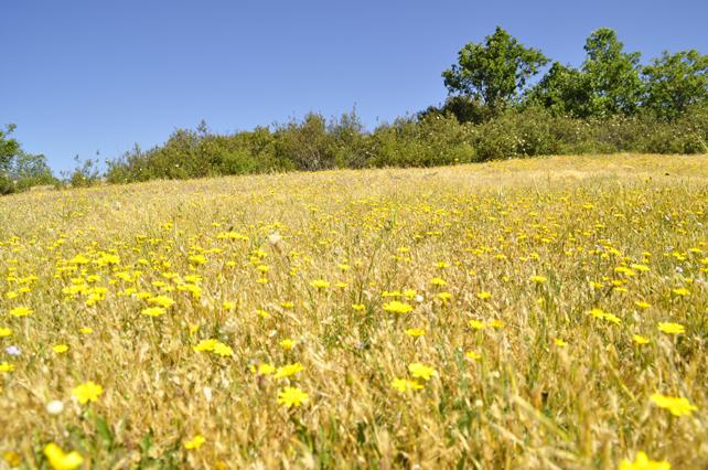 Campo florido en primavera en el paraje de Gundino.