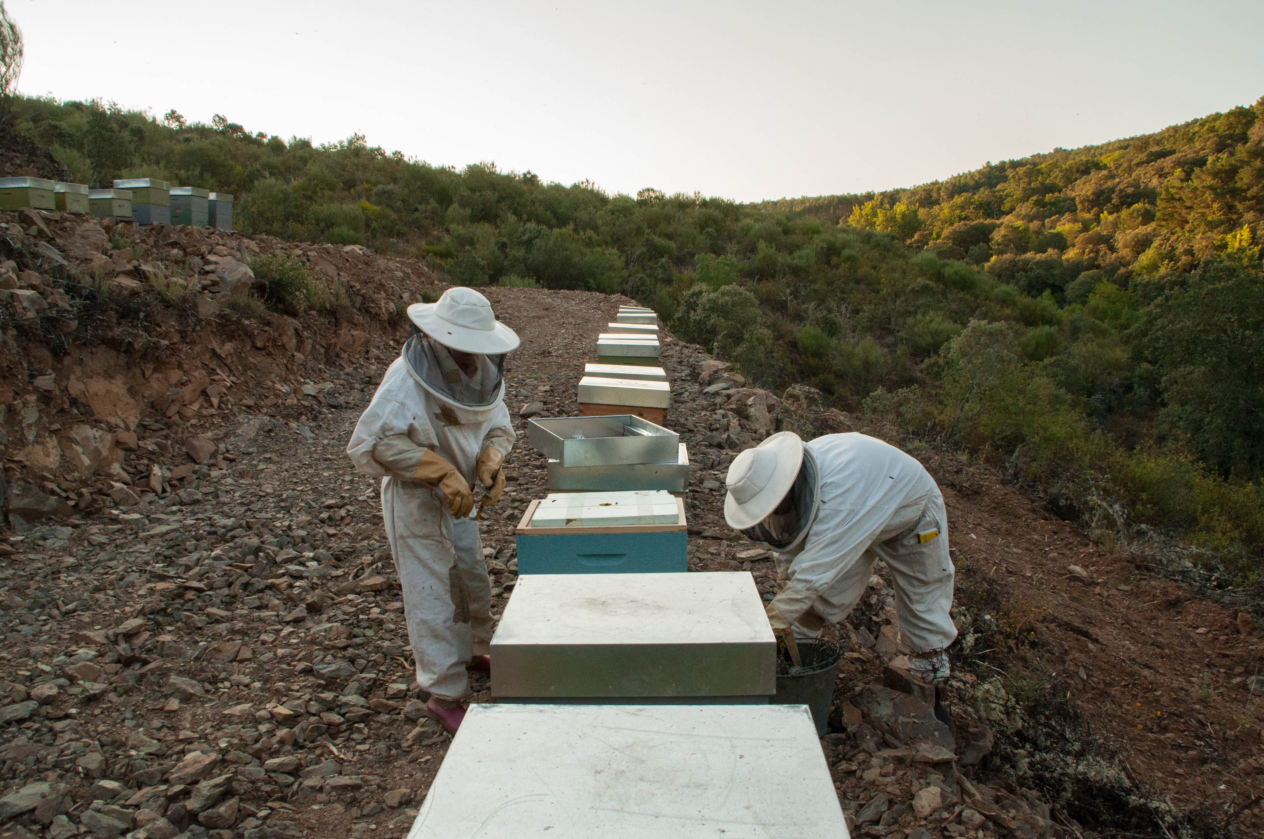 prevención incendio política medioambiental las obreras de aliste miel