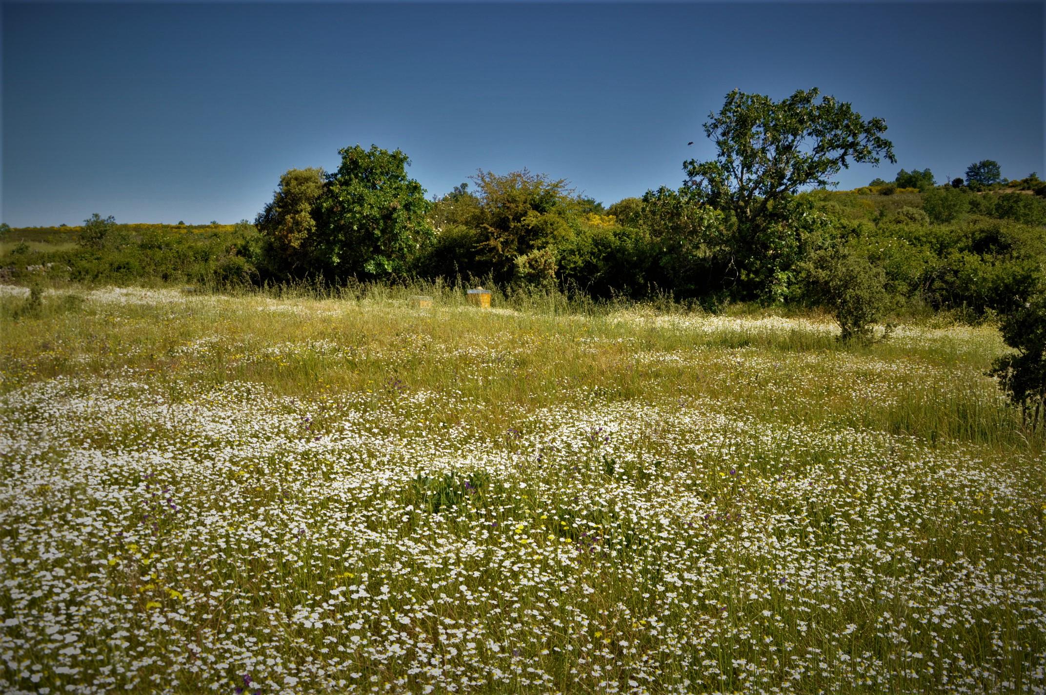 Gallegos del Campo Las Obreras de Aliste primavera flor miel