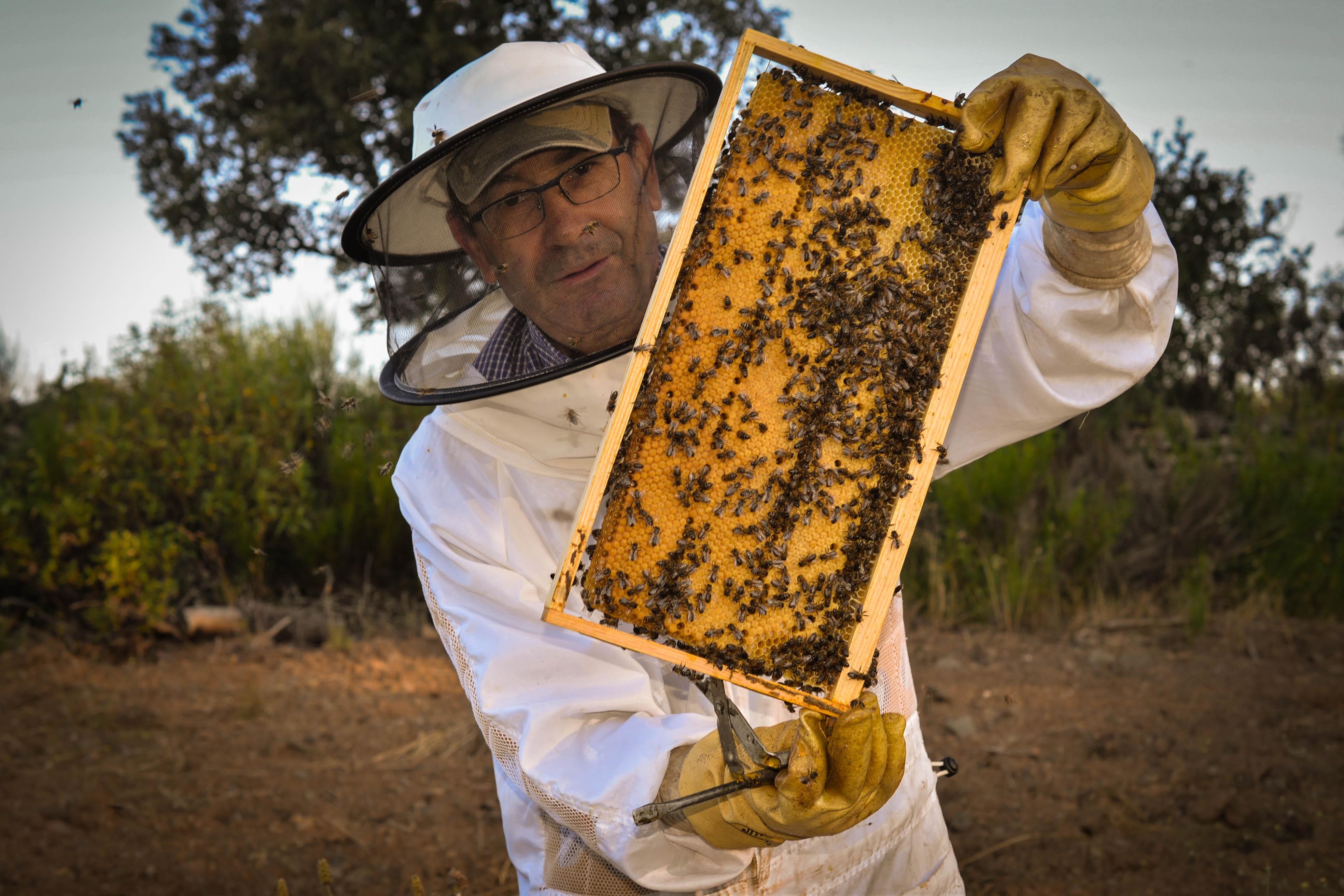 abeja reina puesta Las Obreras de Aliste CB Artesanos de la Miel Aliste Gallegos del Campo Artesanos de la Miel
