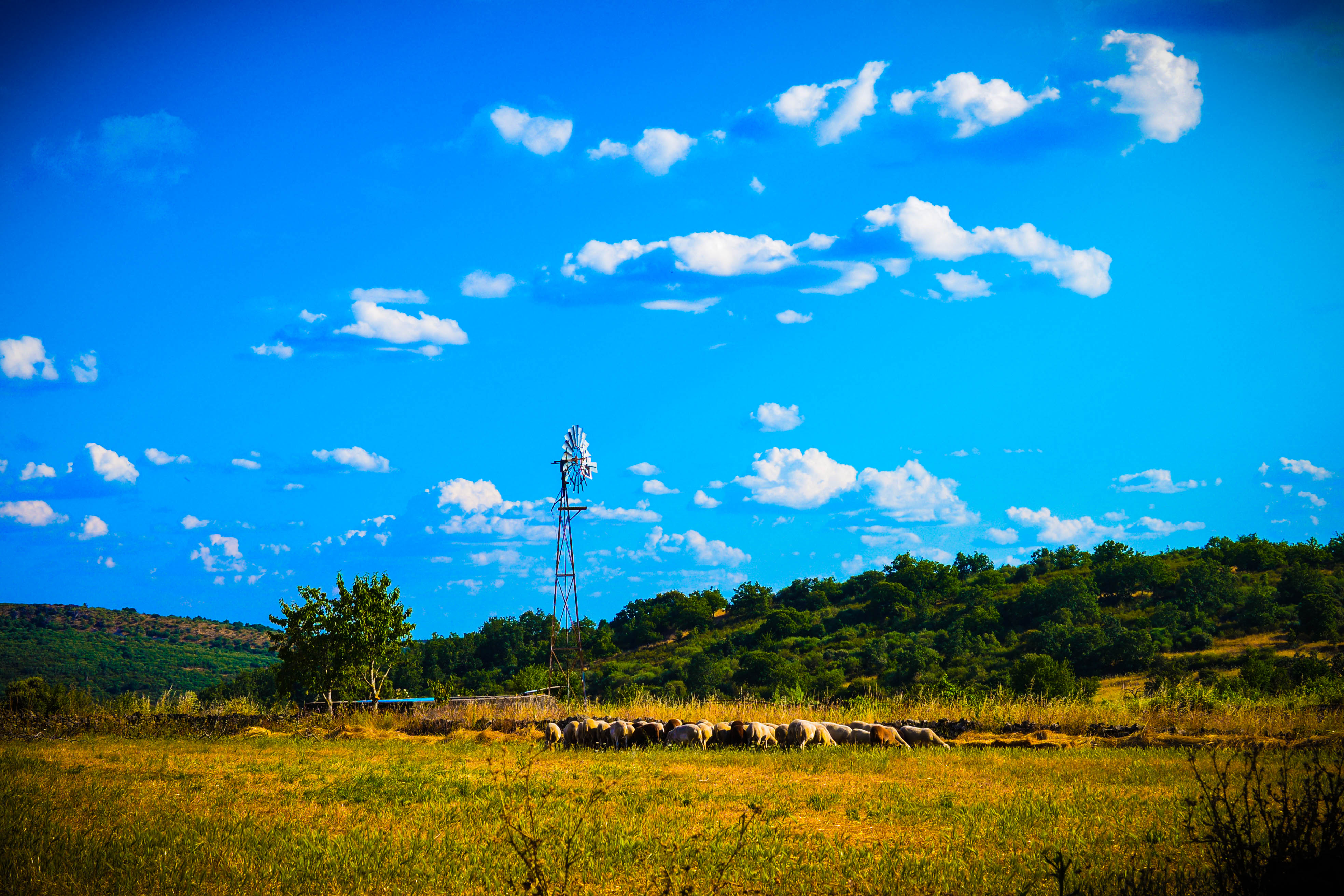 Rebaño de ovejas Las Obreras de Aliste CB Artesanos de la Miel Aliste Gallegos del Campo Artesanos de la Miel