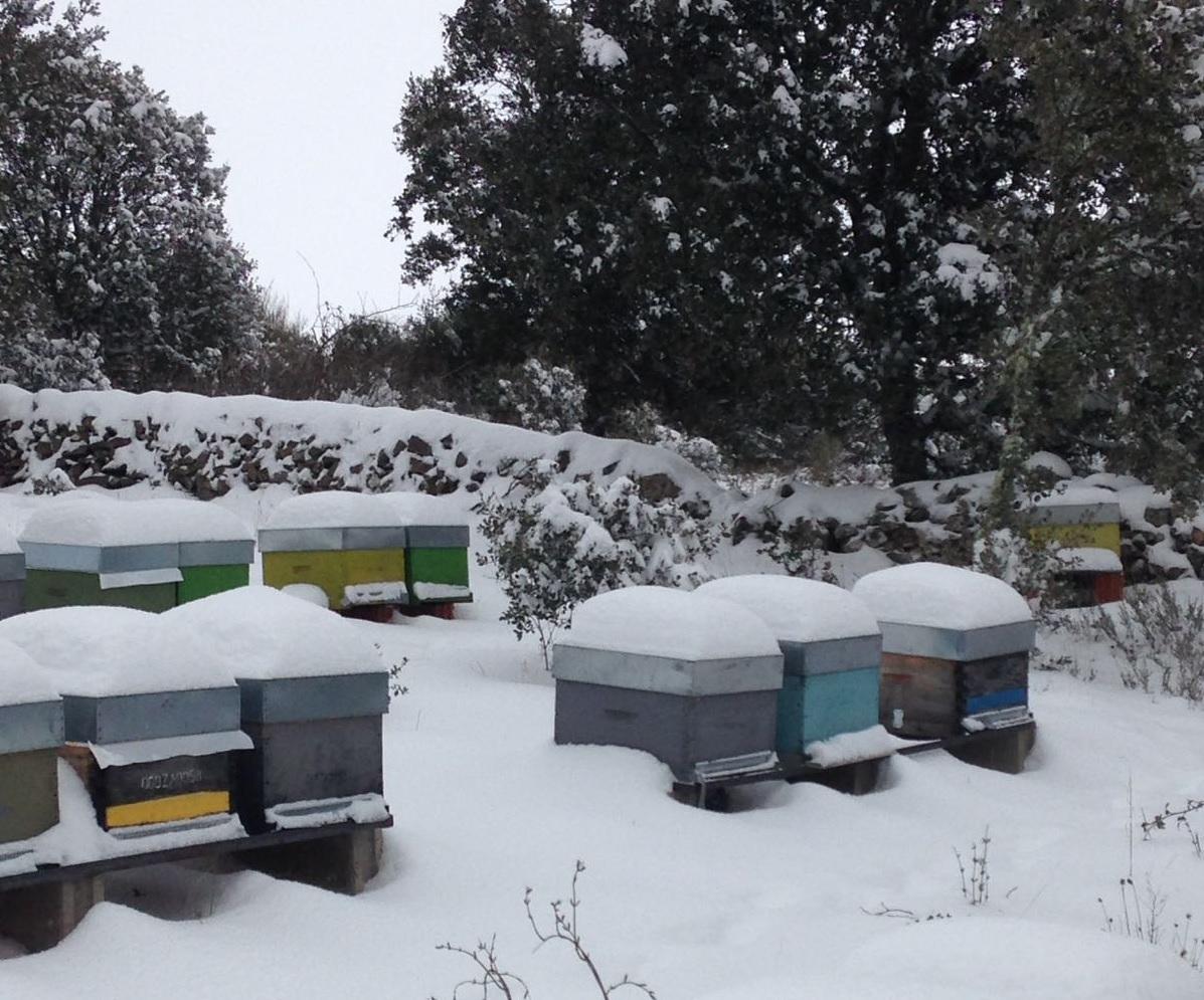 Nieve Las Obreras de Aliste Artesanos de la Miel Zamora apicultura