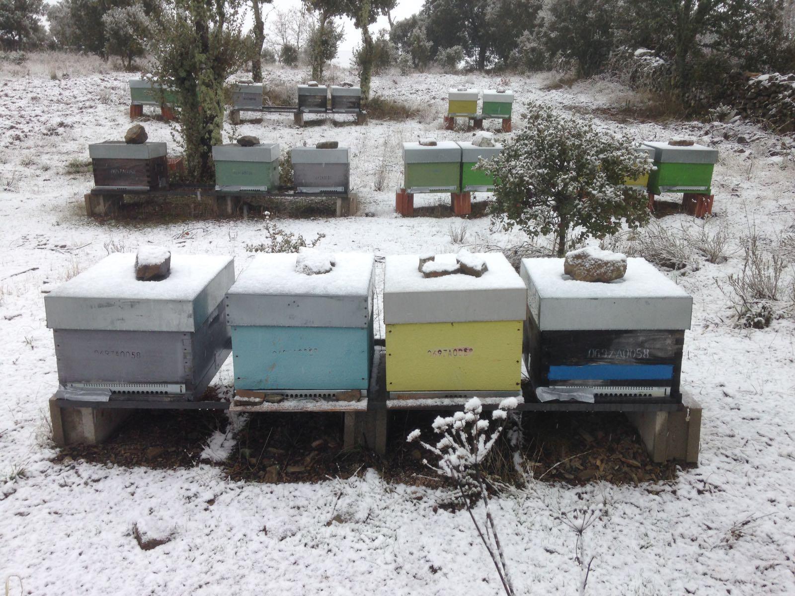 Gallegos del Campo Las Obreras de Aliste nieve miel
