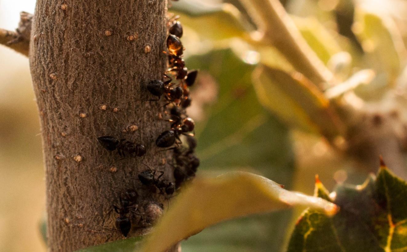Mielada roble Las Obreras de Aliste Artesanos de la miel honey Spain