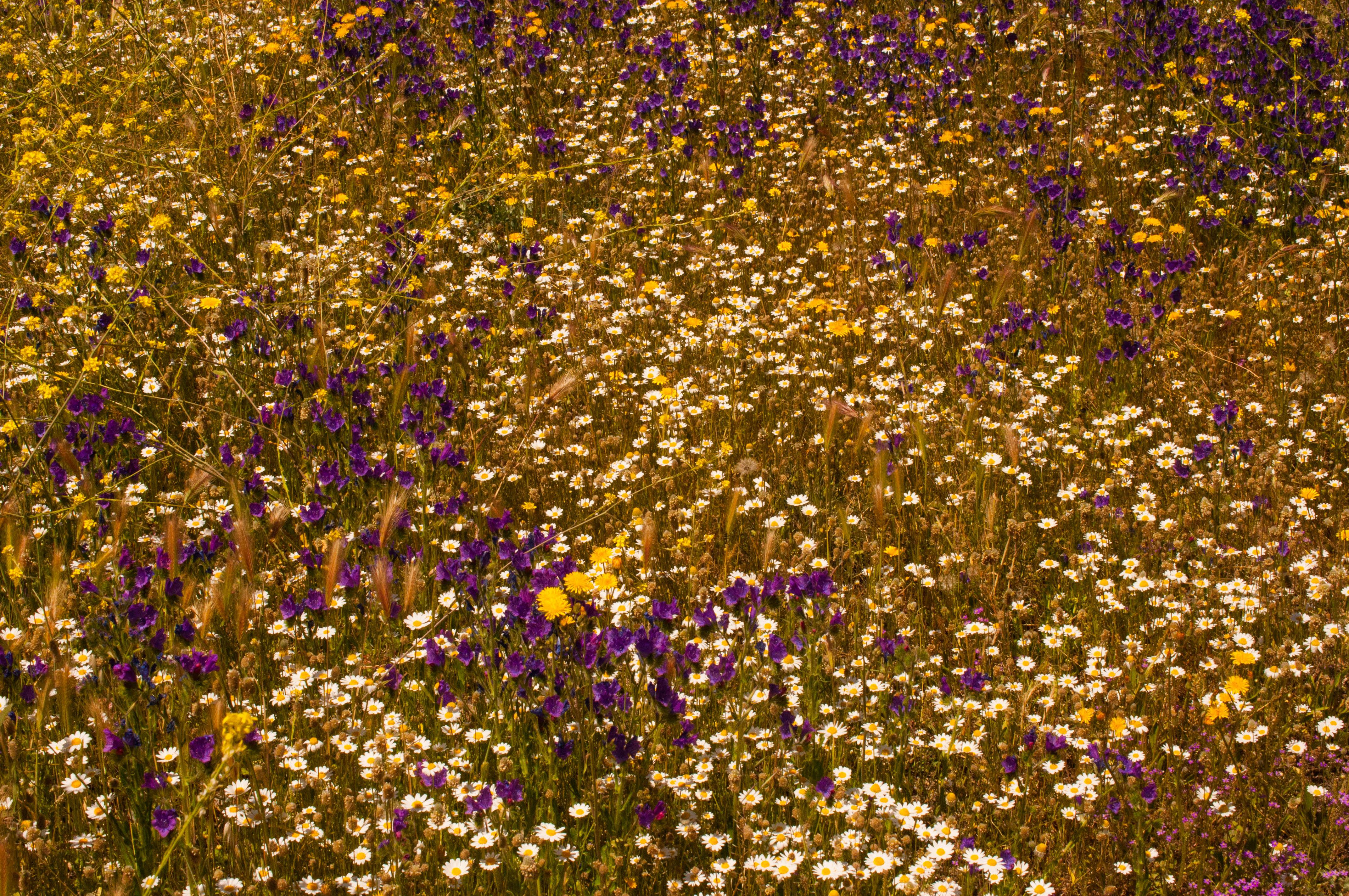 tapiz de flores Las Obreras de Aliste CB Artesanos de la Miel Aliste Gallegos del Campo Artesanos de la Miel