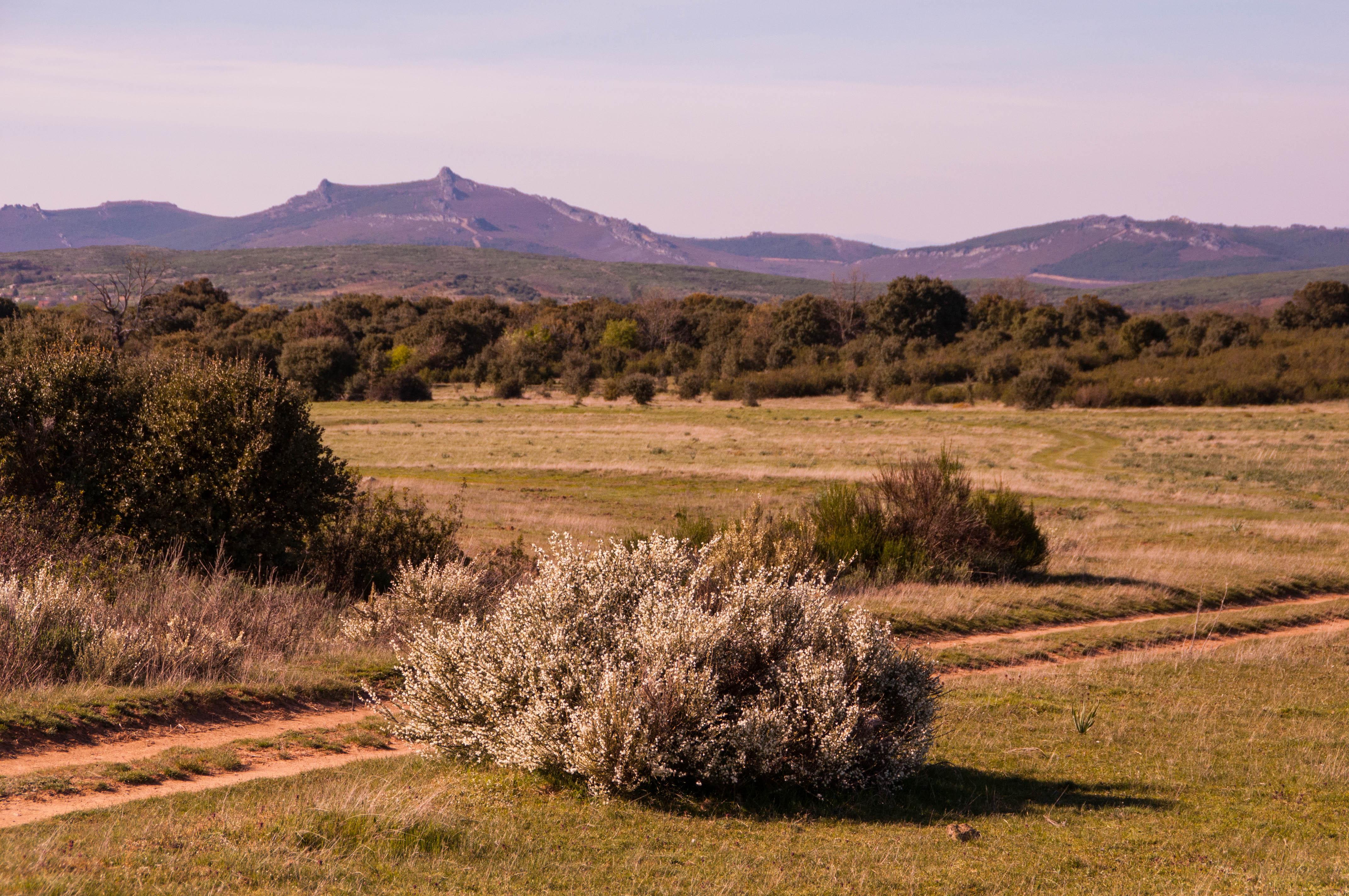 Monte de Peña Mira Las Obreras de Aliste