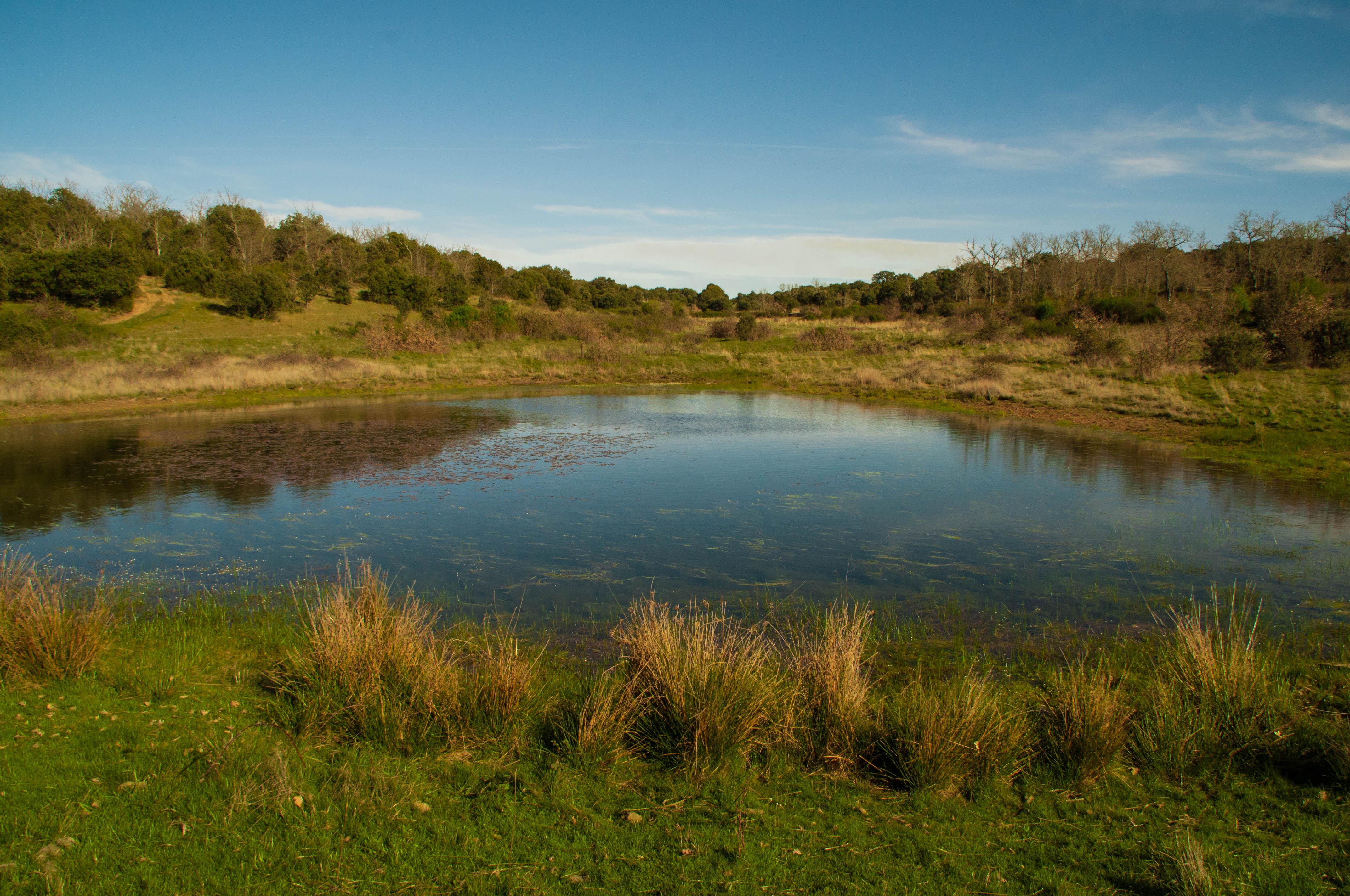 Laguna de Los Bubones Gallegos del Campo Las Obreras de Aliste miel