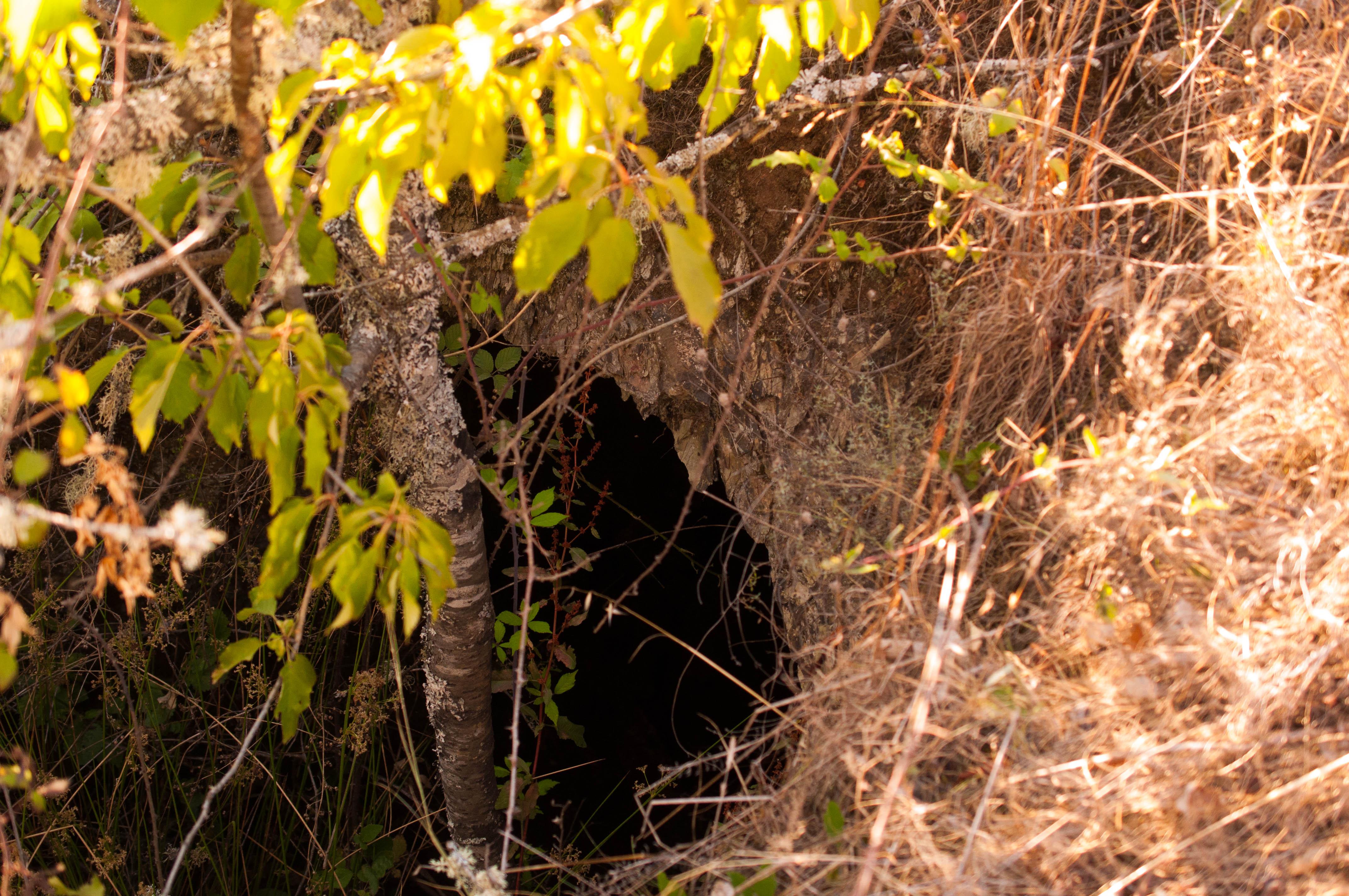 Cueva de Los Moros Gallegos del Campo Las Obreras de Aliste miel