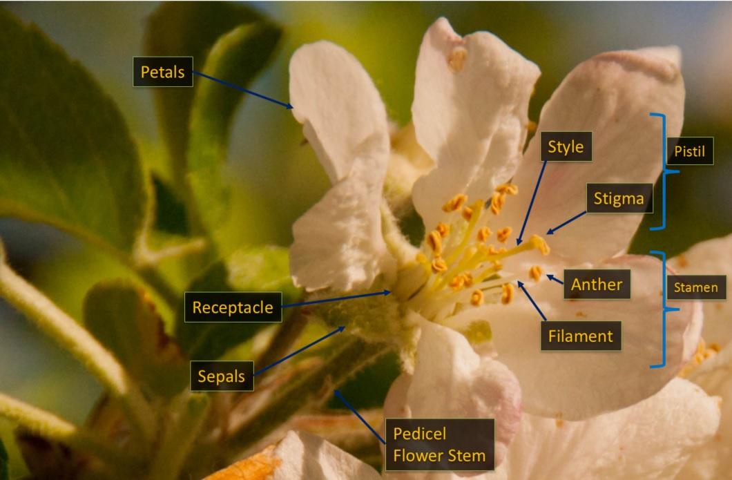 Flower structure Las Obreras de Aliste