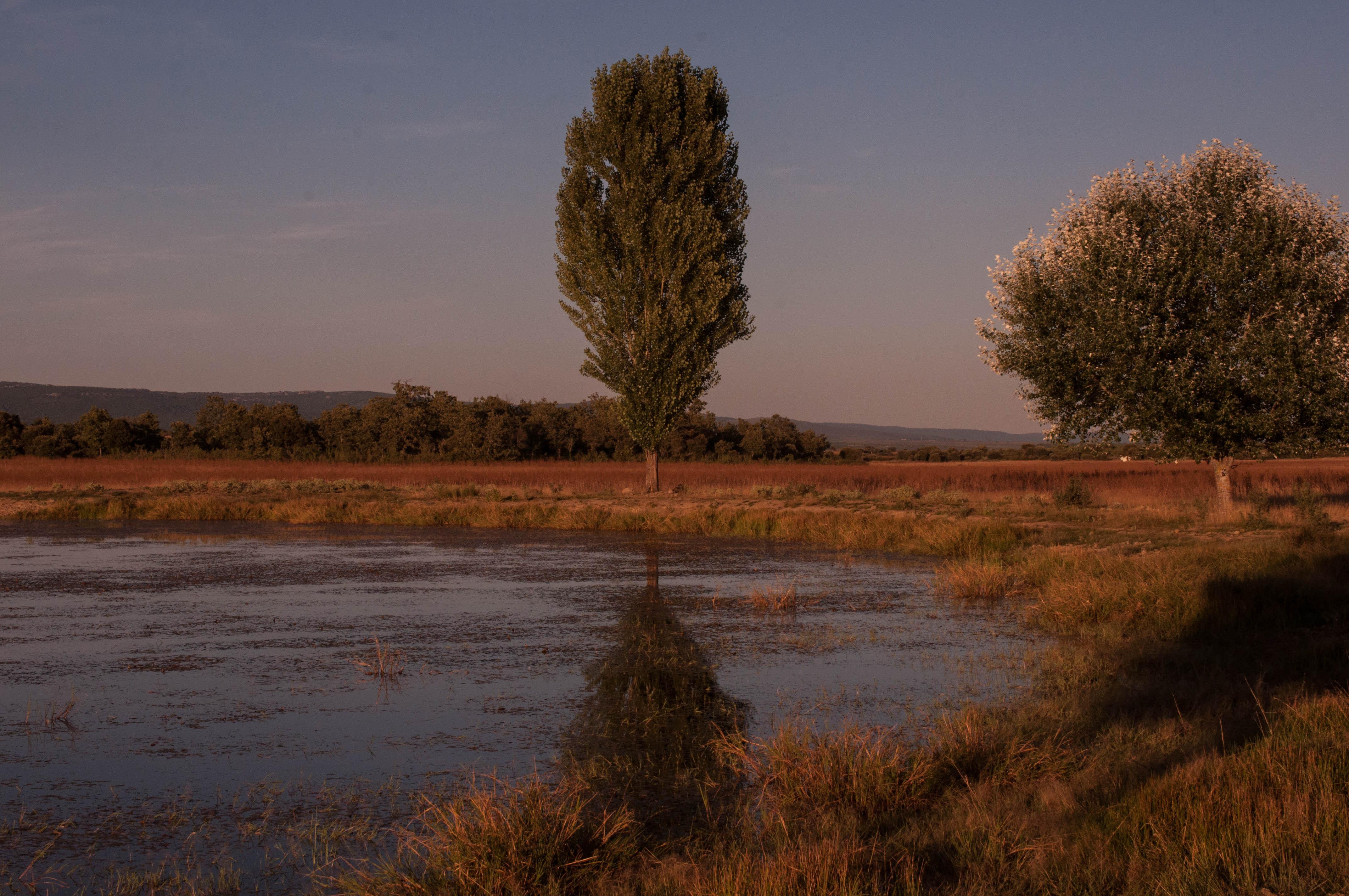 Populus alba laguna riquijada Las Obreras de Aliste Artesanos de la miel Zamora Spain