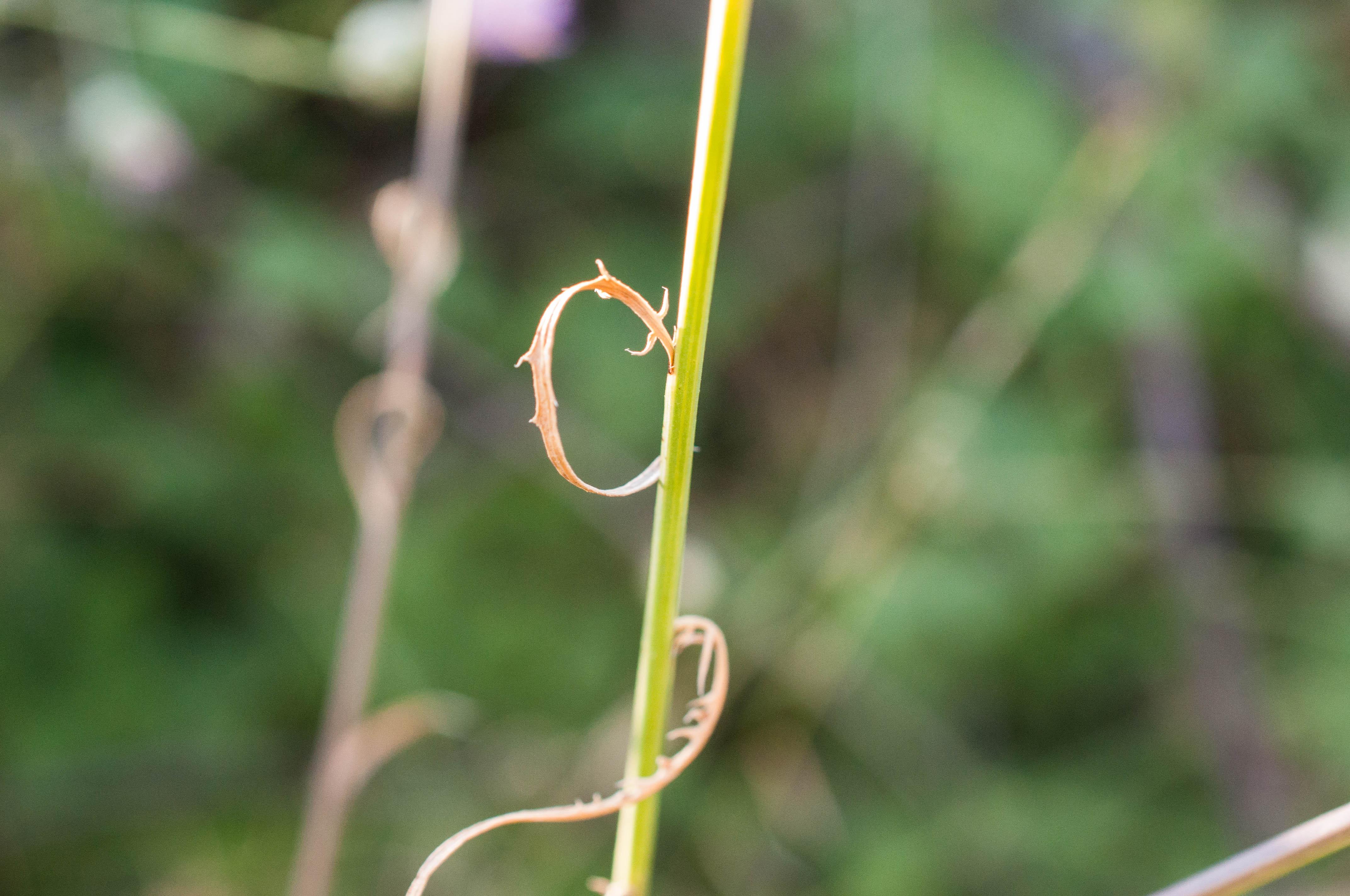 Microlonchus salmanticus Las Obreras de Aliste CB Artesanos de la Miel Aliste Gallegos del Campo Artesanos de la Miel