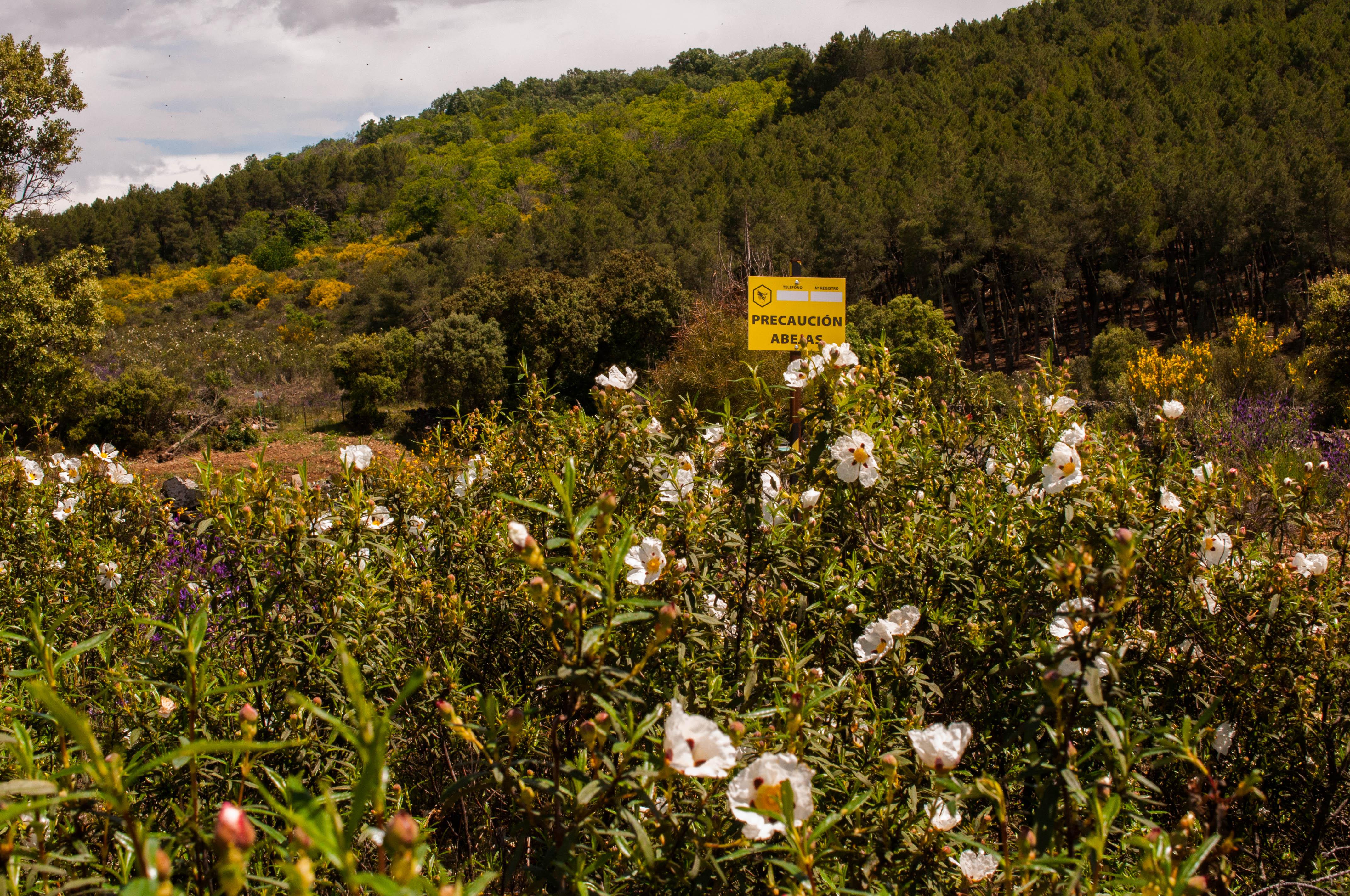Biodiversidad Apicultura estante Las Obreras de Aliste CB Artesanos de la MIel